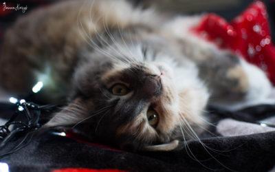 Kot to nie zabawka
